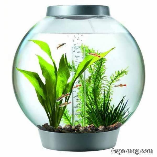 ایده های خواستنی برای دیزاین تنگ ماهی