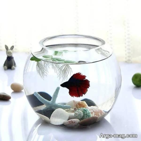 ایده های جذاب برای دیزاین تنگ ماهی