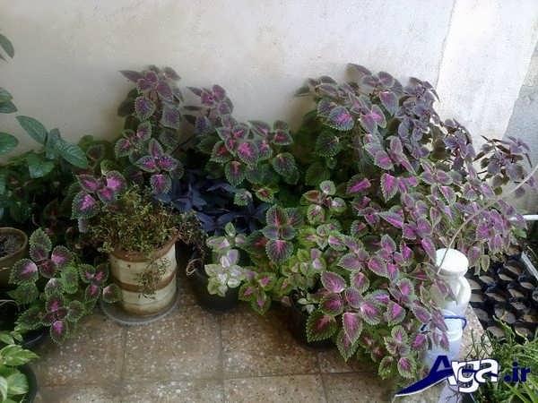 گالری گل حسن یوسف