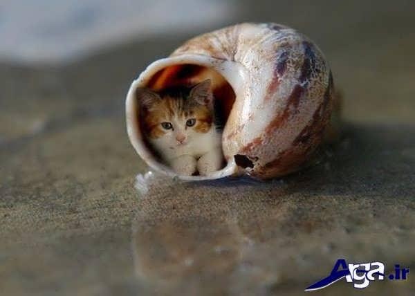 عکس طنز خفن حلزون