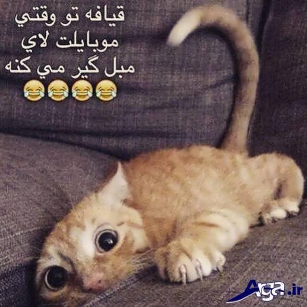 عکس طنز خفن گربه