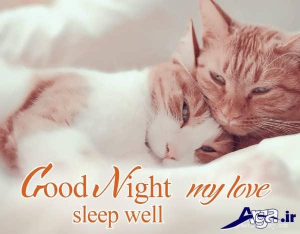 عکس شب بخیر دو گربه زیبا