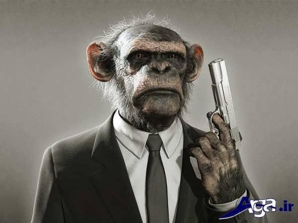 عکس زیبا از میمون