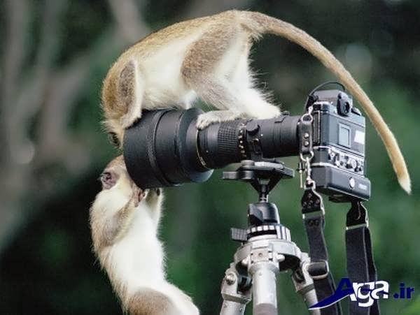 عکس میمون و دوربین
