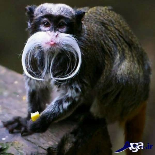 عکس میمون دوست داشتنی
