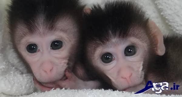 عکس دو بچه میمون