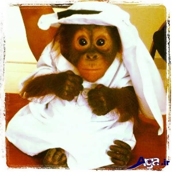 عکس میمون زیبا
