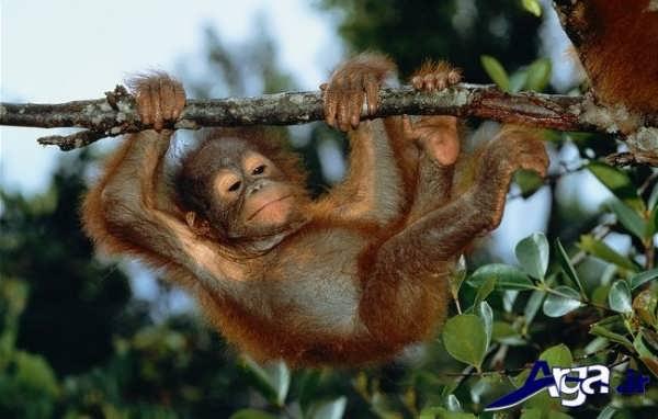عکس میمون روی درخت