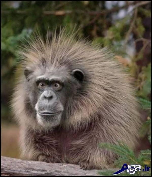 عکس میمون جالب