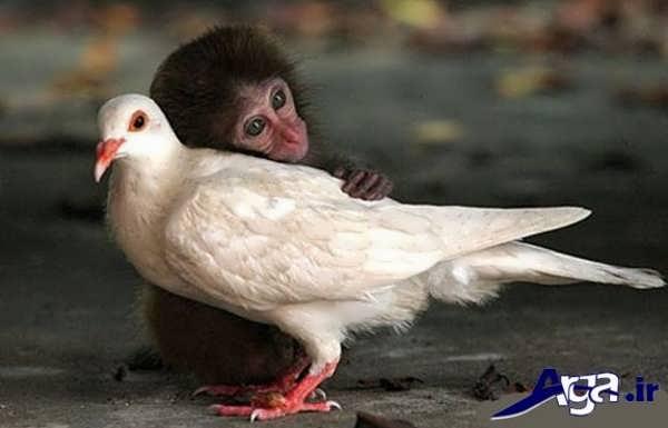 عکس میمون و پرنده