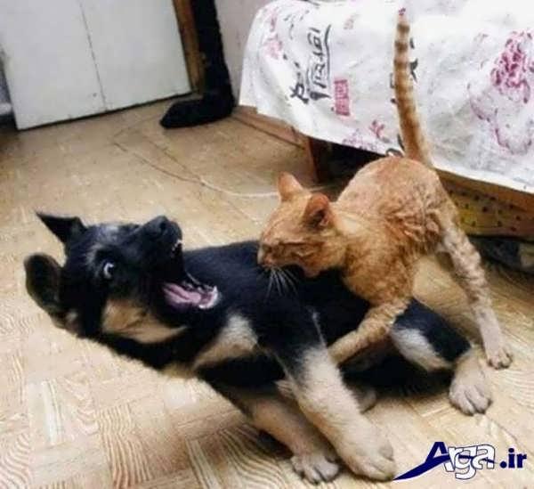 عکس جالب خنده دار