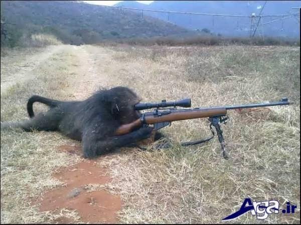 عکس جالب خنده دار میمون