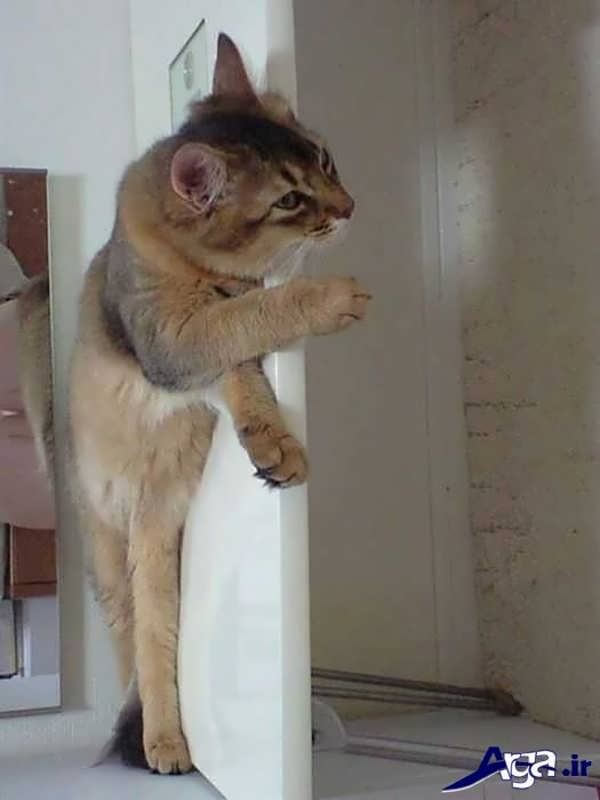 عکس جالب خنده دار گربه