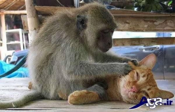 عکس جالب خنده دار میمون و گربه