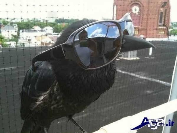 عکس جالب خنده دار پرنده