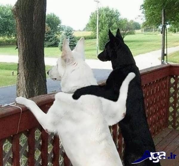 عکس جالب خنده دار دو سگ