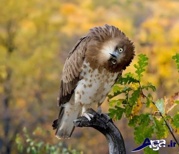 عکس جالب خنده دار پرنده کوچک