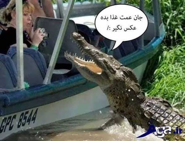 عکس جالب خنده دار تمساح