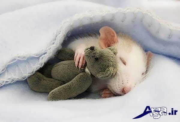 عکس جالب خنده دار موش