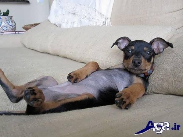 عکس جالب و خنده دار سگ