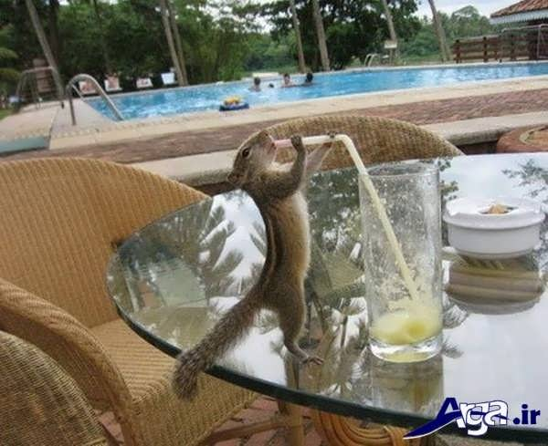 عکس جالب خنده دار نوشیدنی