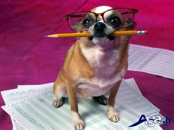 عکس جالب خنده دار سگ مداد در دهان