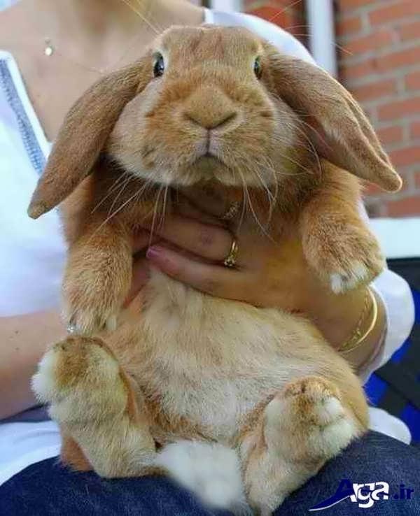 عکس خرگوش