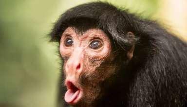 عکس جالب از میمون