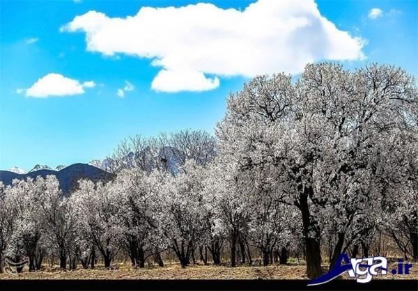 عکس های طبیعت ایران