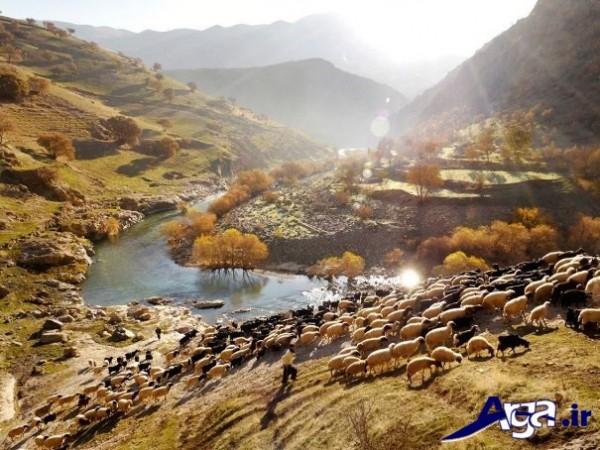 عکس طبیعت ایران و گوسفند
