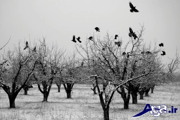 عکس طبیعت ایران زمستان