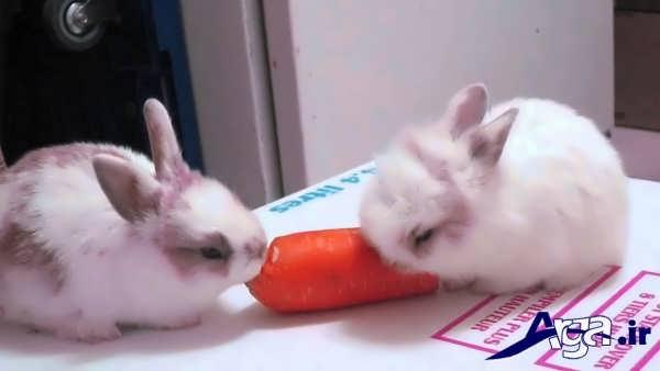 عکس خرگوش جذاب