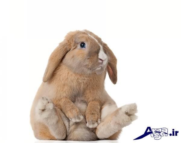 عکس خرگوش نشسته