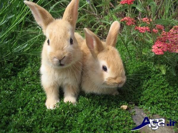 عکس دو خرگوش زیبا