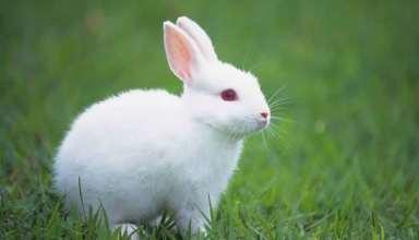 عکس خرگوش بسیار زیبا و حذاب