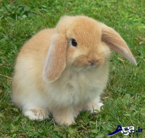 عکس خرگوش زیرک