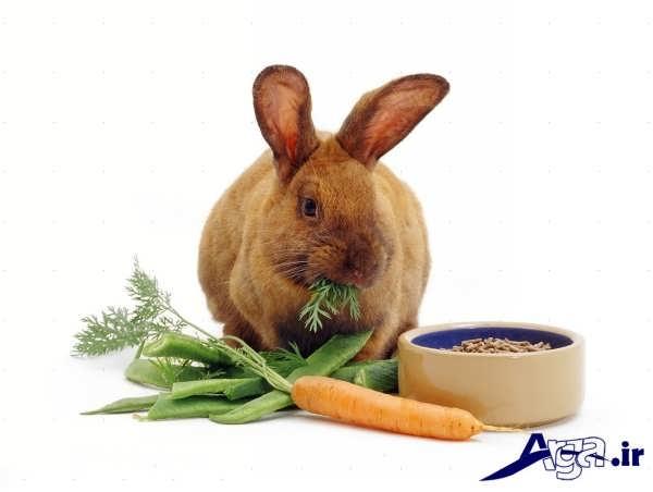 عکس خرگوش و تغذیه آن