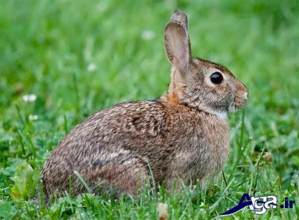 خرگوش در طبیعت زیبا