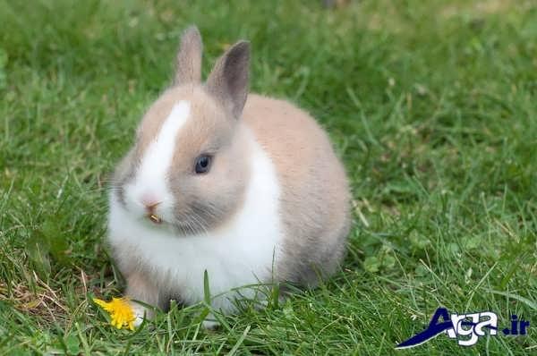 عکس خرگوش زیبا