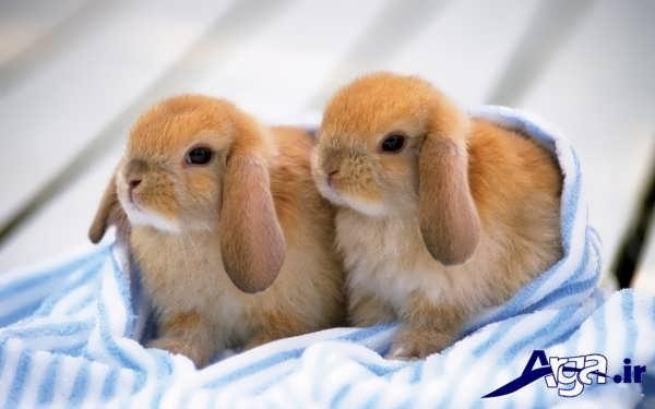 عکس خرگوش دوست داشتنی