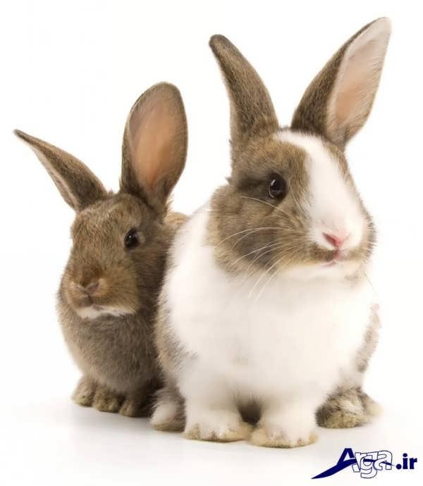 تنوع رنگ در خرگوش
