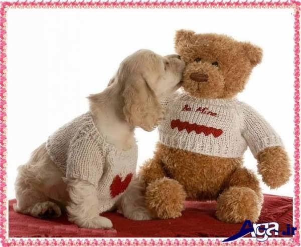 عکس عاشقانه عروسکی خرس و سگ