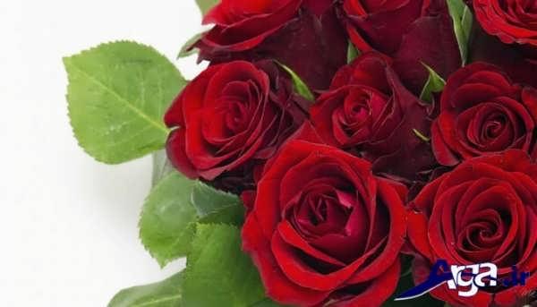 عکس دسته گل رز قرمز