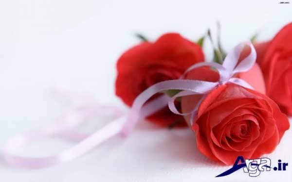 مجموعه عکس های گل رز