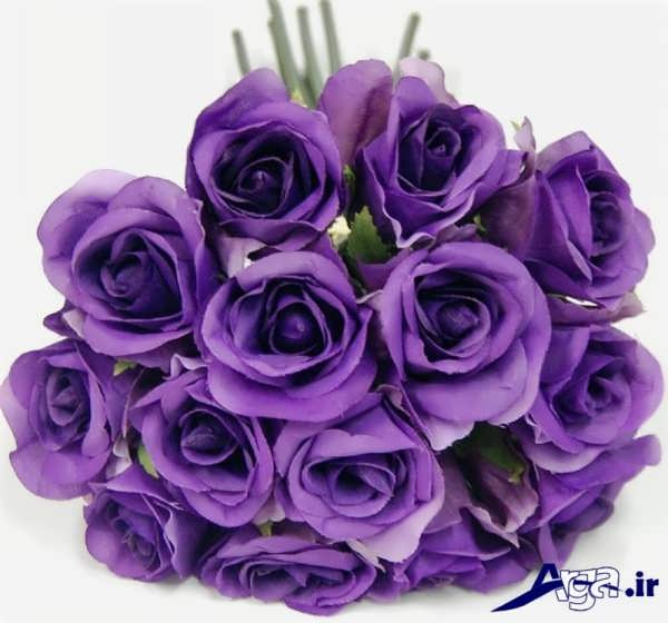 عکس گل رز بنفش