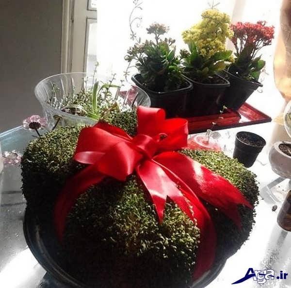 سبزه عید زیبا و جدید