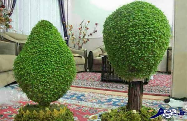 سبزه طرح درختچه