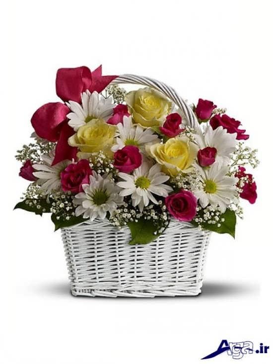عکس سبد گل بابونه