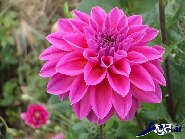تصاویر گل های زیبا کوکب