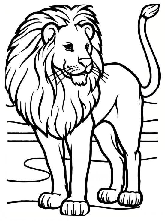 نقاشی کارتونی نقاشی شیر و انواع رنگ آمیزی شیر سلطان جنگل برای کودکان